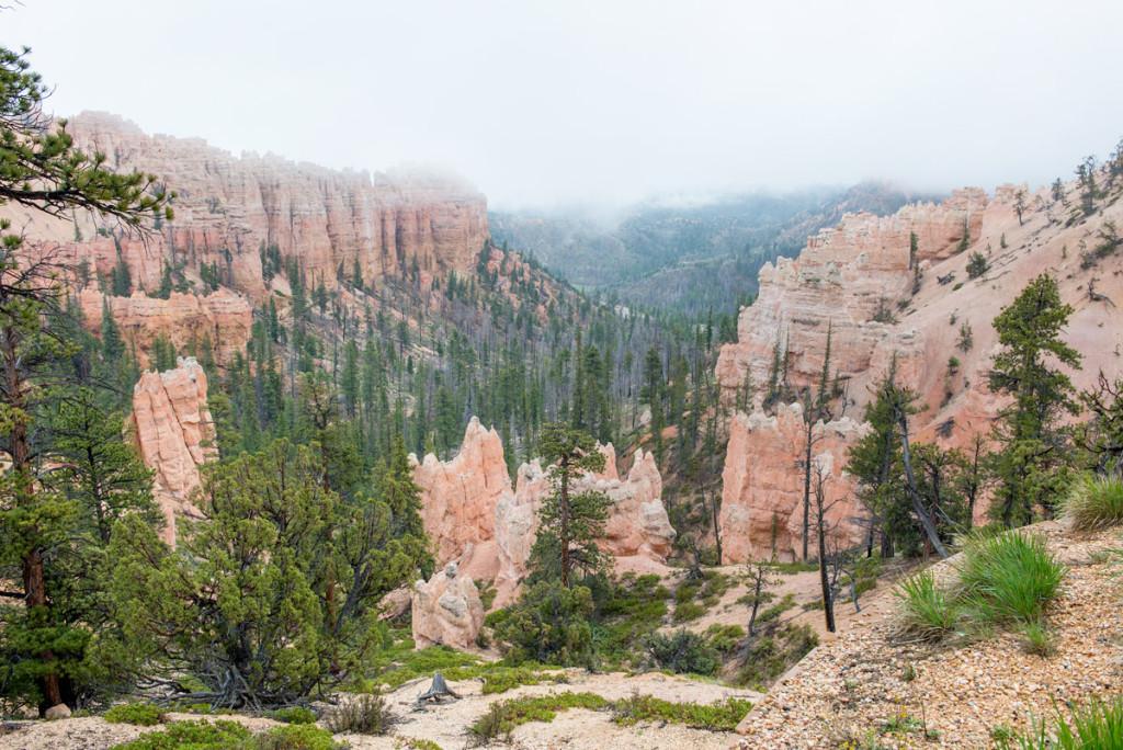 Bryce canyon ponořený v mlze