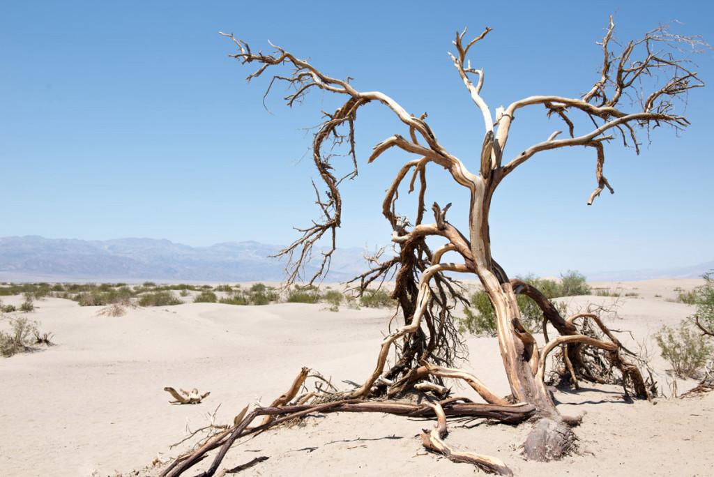 strom ošlehaný údolím smrti