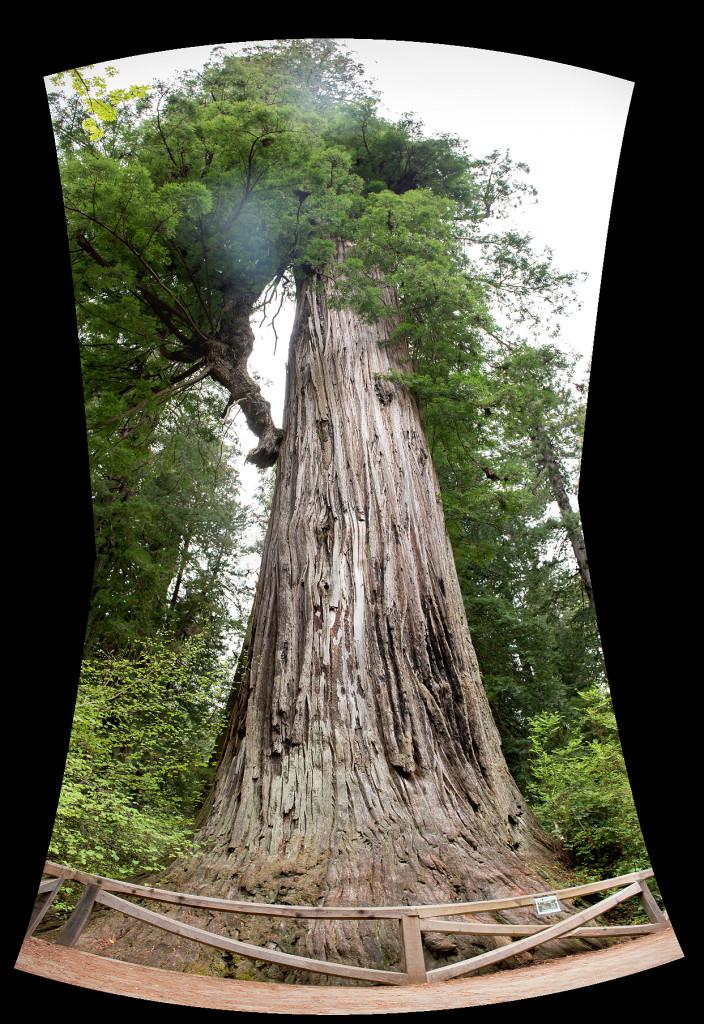 Big Tree neboli Velký Strom
