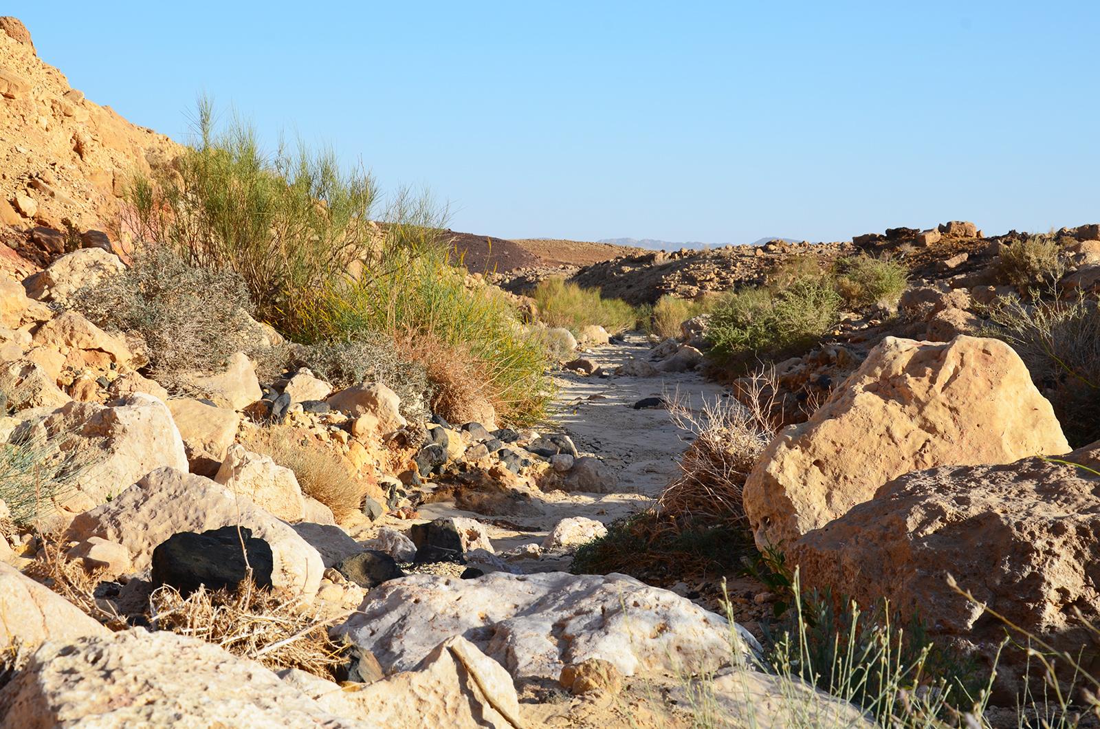 vádí v Negevské poušti