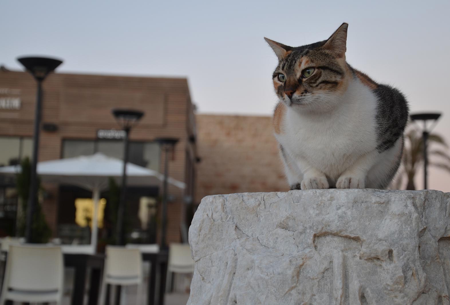 Kocouří model, Caesarea, Izrael