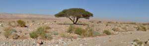 izrael negevska poust