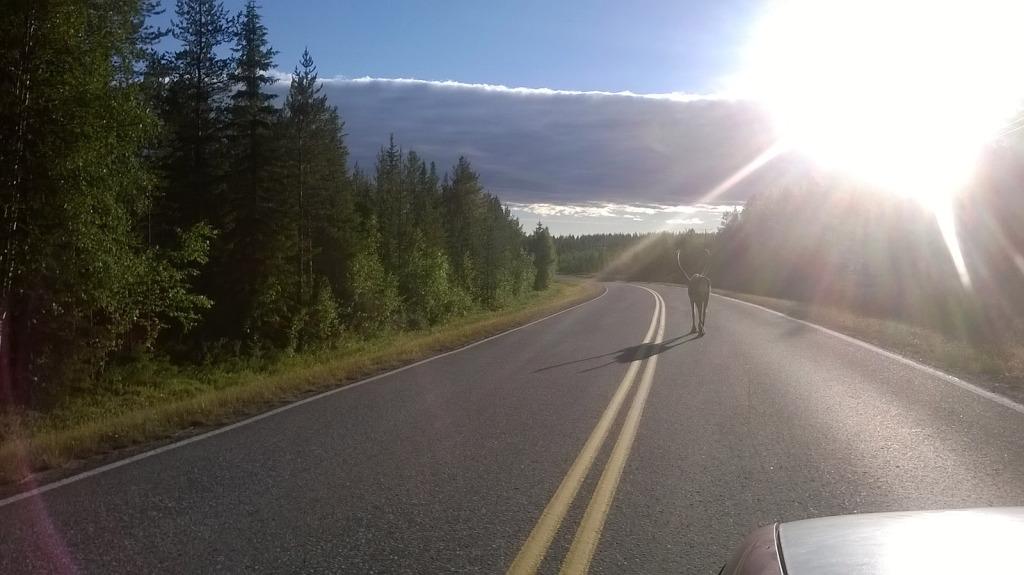sobi na silnici finsko
