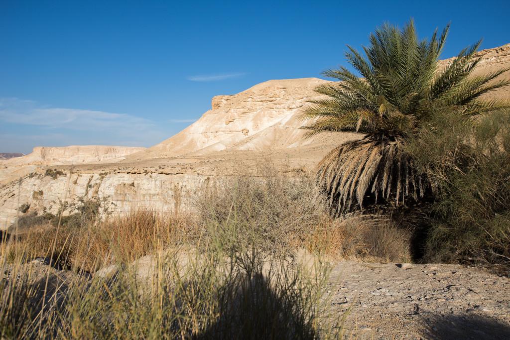Oaza en akev negev izrael
