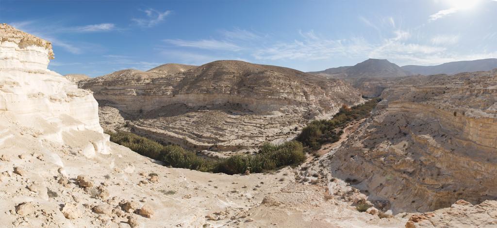 Rákosí uprostřed pouště