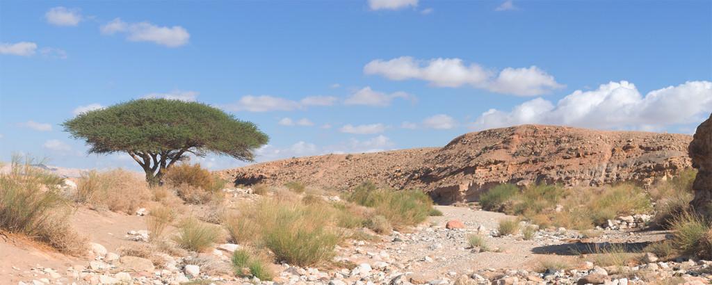 Strom uprostřed pouště