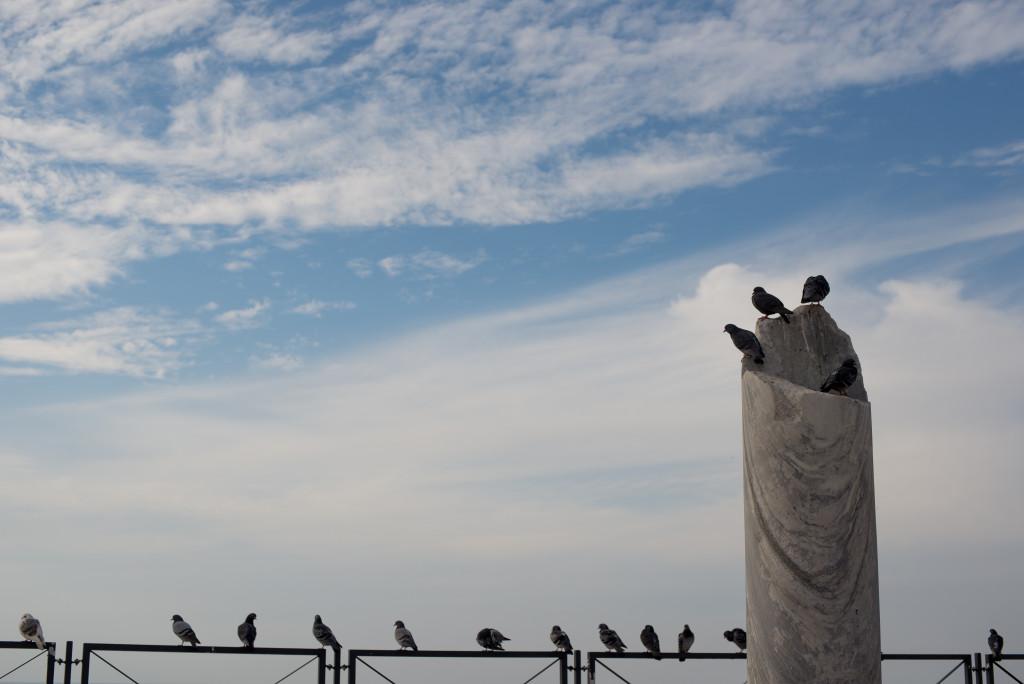 holubi letka caesarea izrael