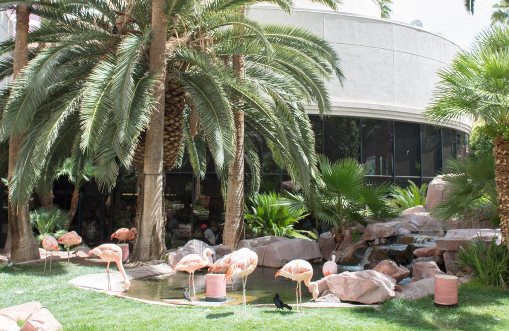 plameňáci v hotelu Flamingo