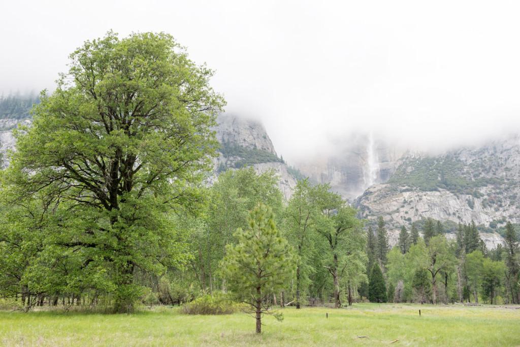 příroda Yosemitského NP