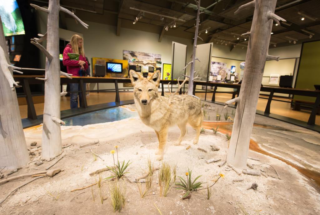 digforfree.com mini yellowstone-visitor-center-stuffed-wolf