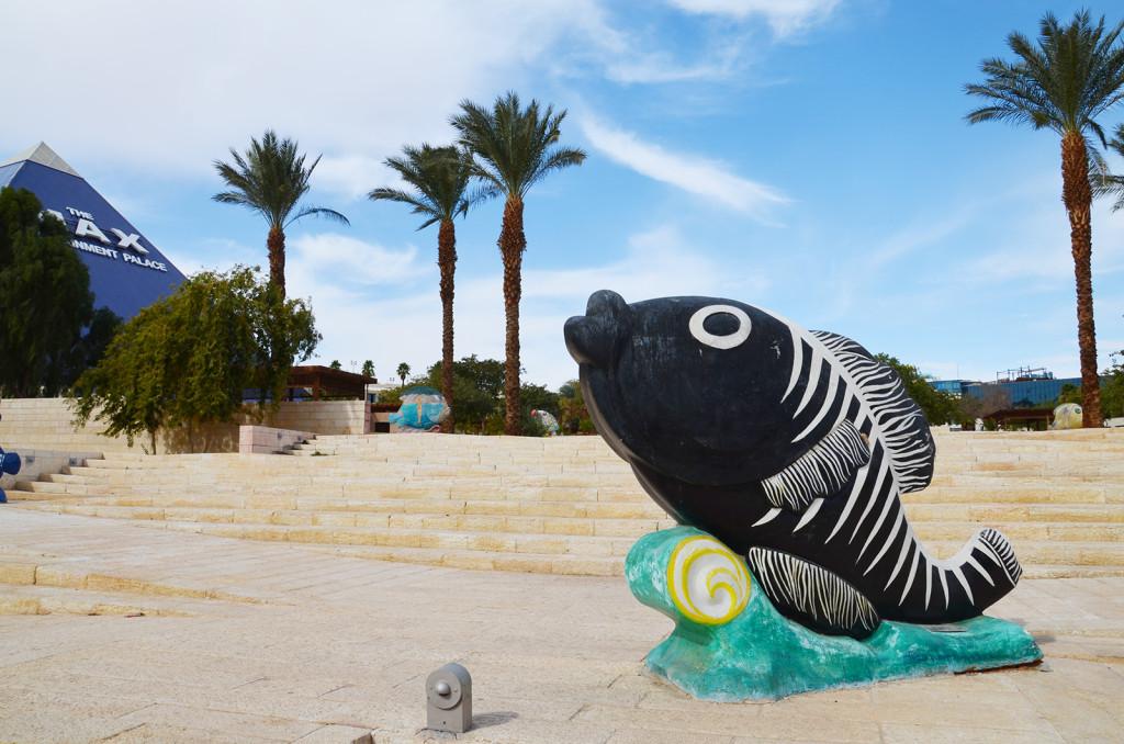 ryba na souší, Eilat, Izrael