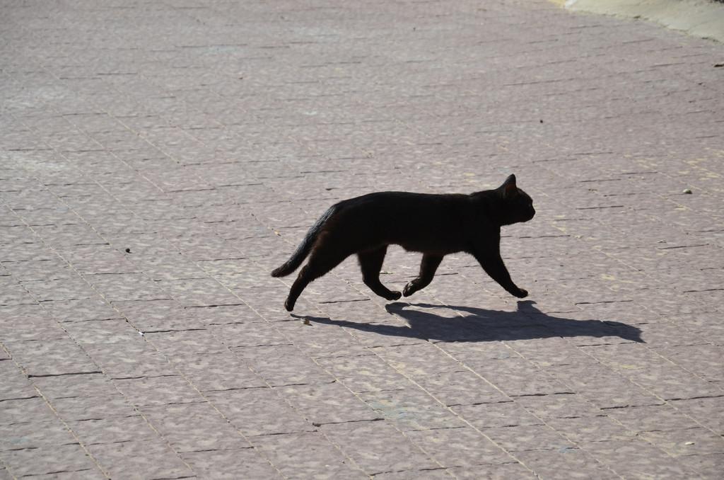 levitující kočka, Mizpe Ramon, Izrael