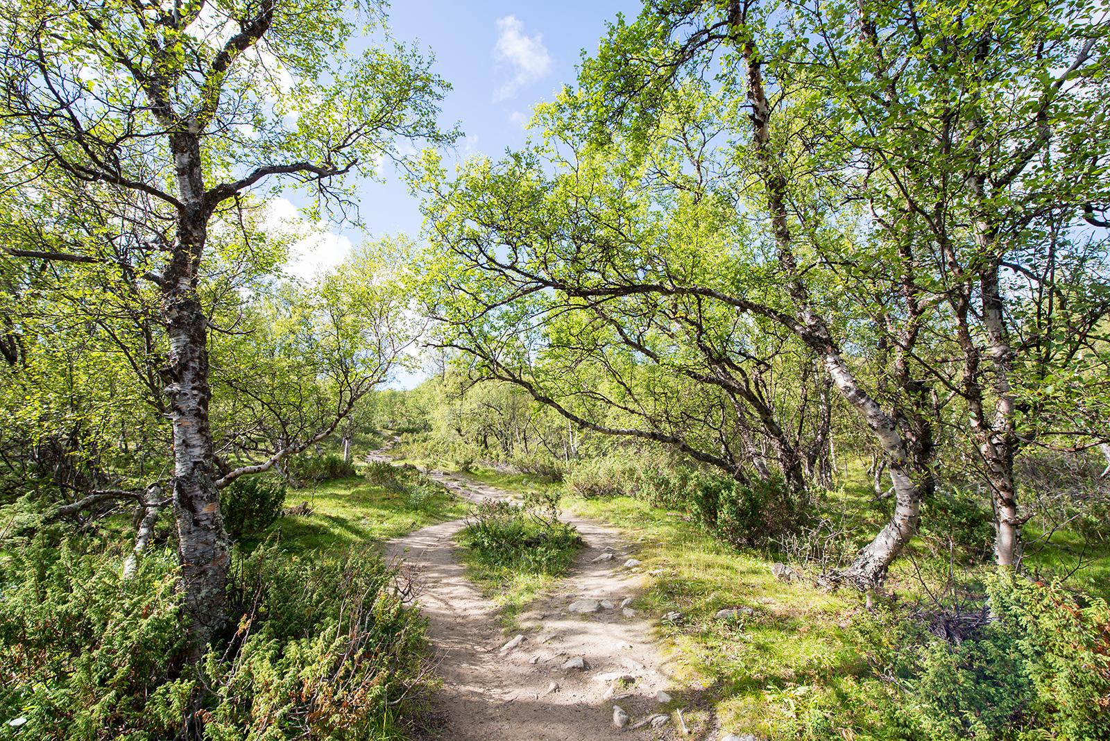 Podzimní Lofoty – WWOOF dobrovolnictví a cesta domů