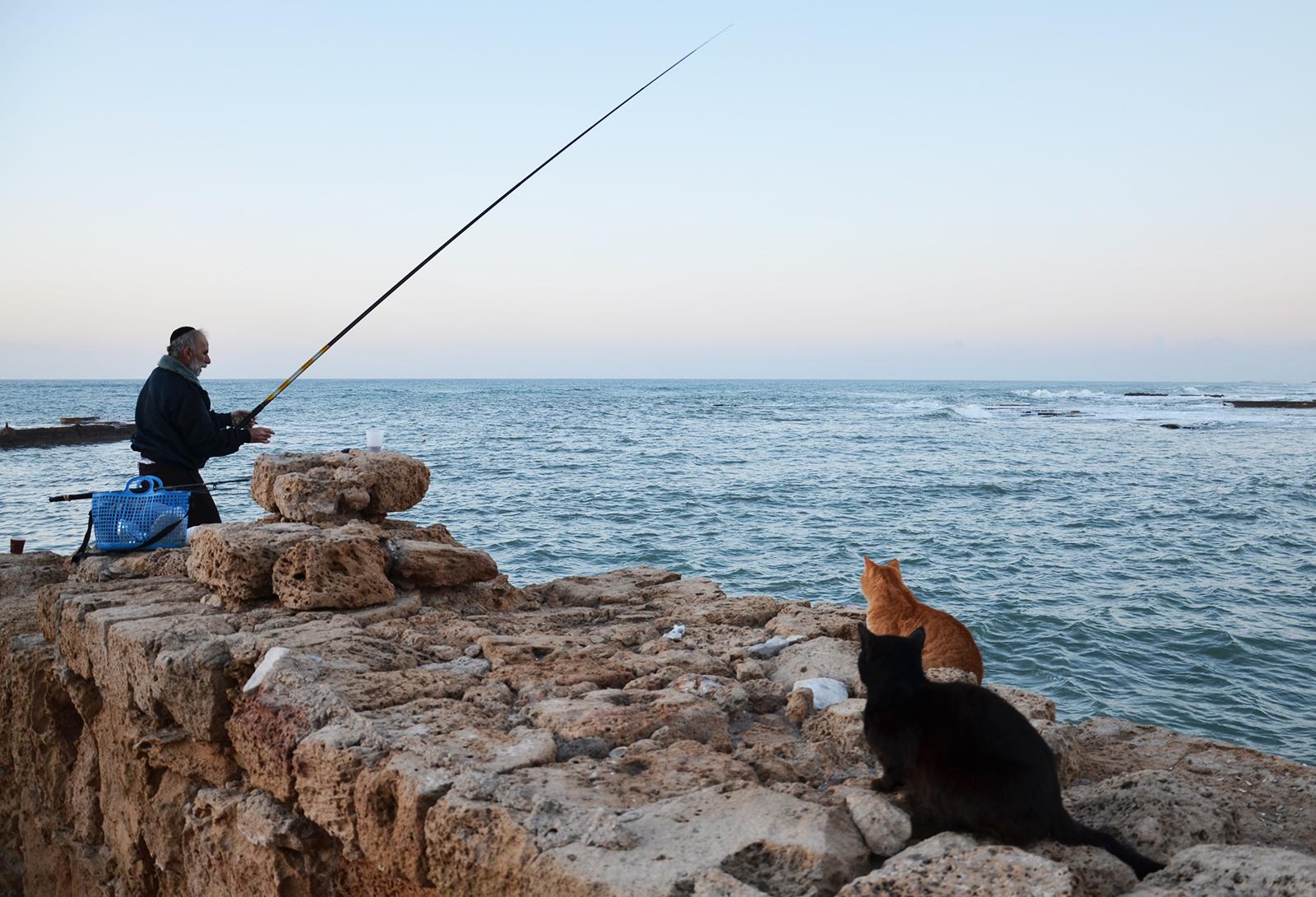 rybář a kočičí čekající, Caesarea, Izrael
