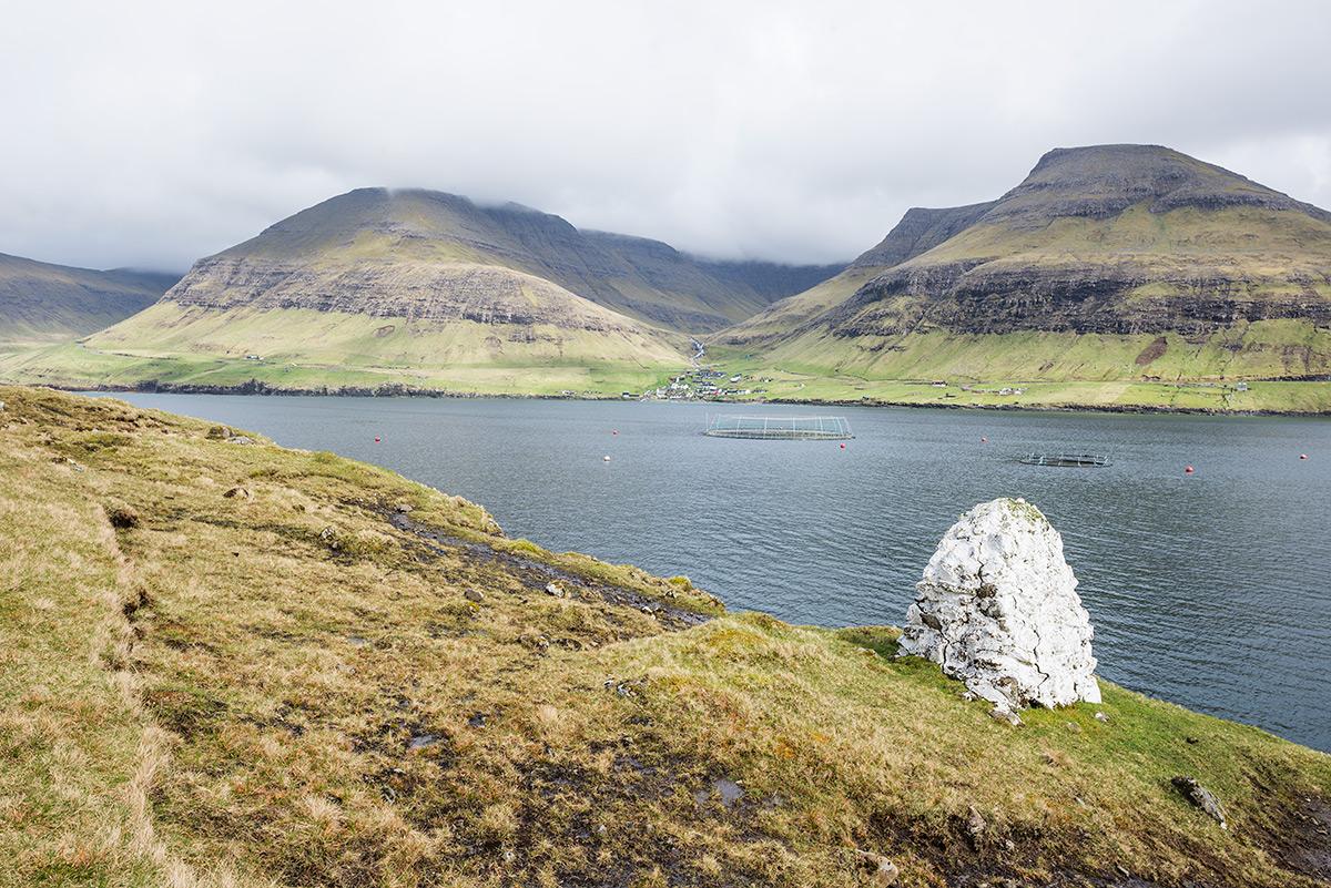 Faroe islands salmon